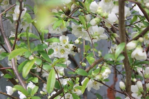 May13_bee2