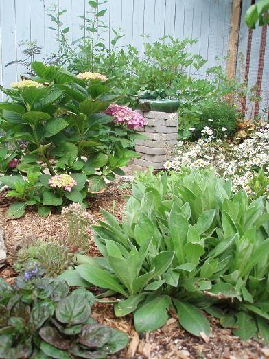 June24_garden3