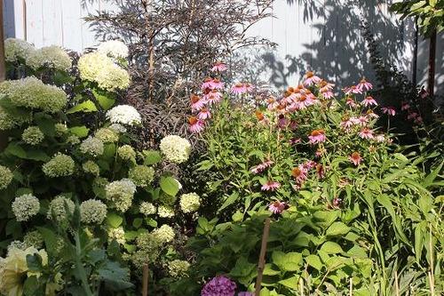 Aug5_garden1
