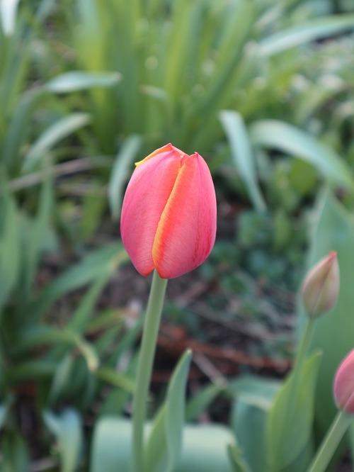 May7 (7)