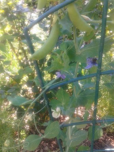 july14_sspea