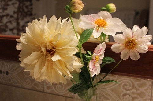 Oct23_dahlias