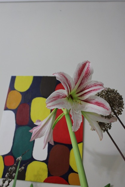 Dec13_amaryllis