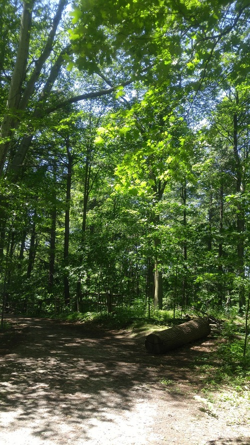 July8_Kortright (1)