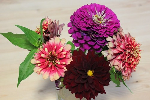 Sept14_cutdahlias