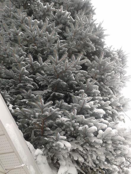 Dec15_eg