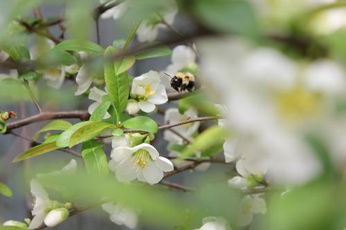 May13_bee1