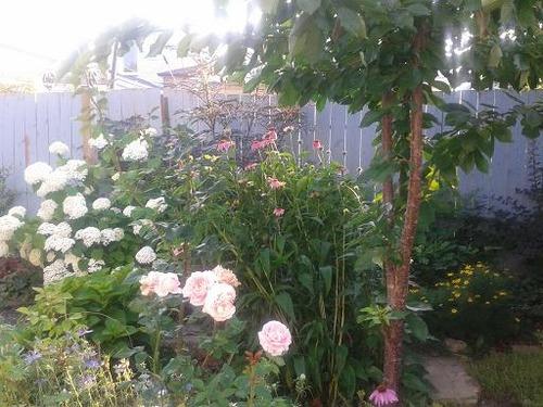 july16_garden