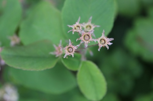 May22_barberry