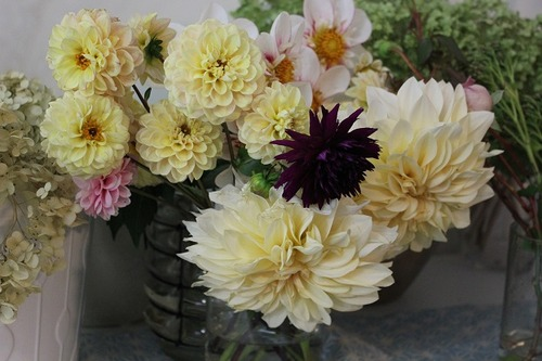Oct22_dahlias