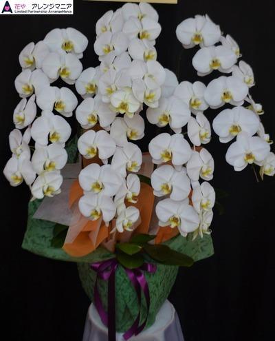 胡蝶蘭・沖縄の花屋・開店祝い32400