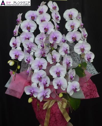 胡蝶蘭・沖縄の花屋・開店祝い・竣工祝い