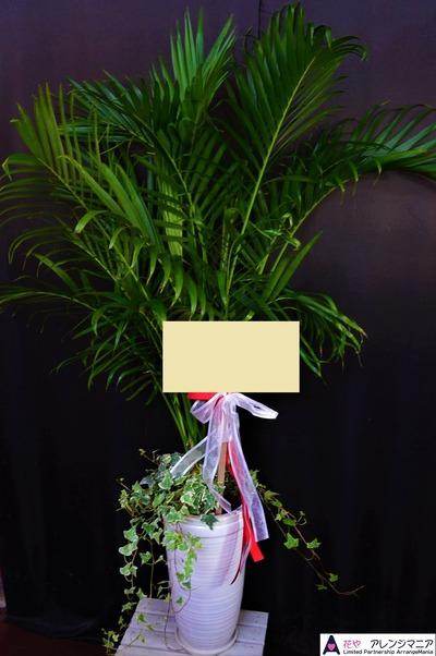 那覇の開店祝いのお花