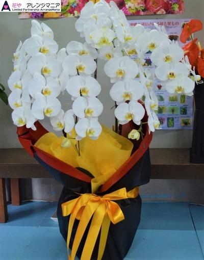 沖縄で開店祝いに胡蝶蘭