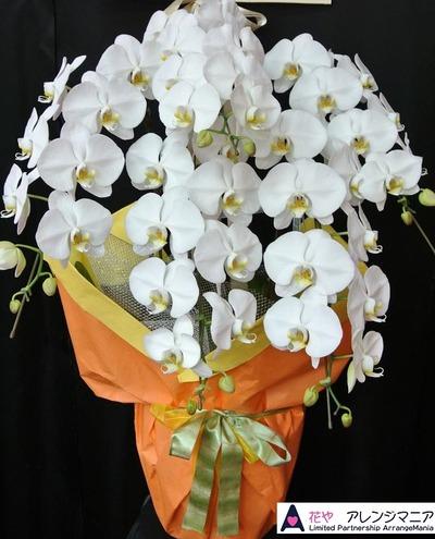 沖縄で開店祝いの胡蝶蘭の配達
