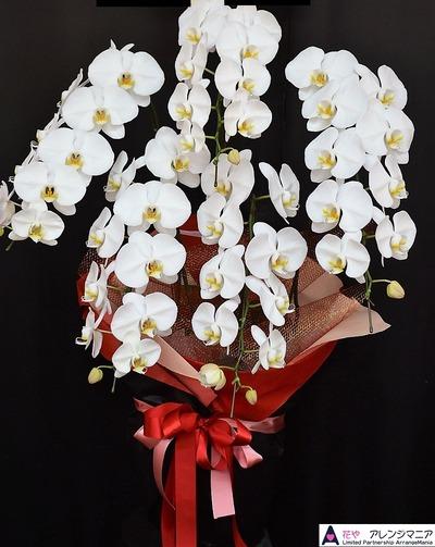 胡蝶蘭│沖縄の花屋