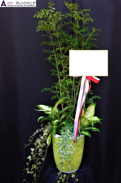沖縄で開店祝いのお花