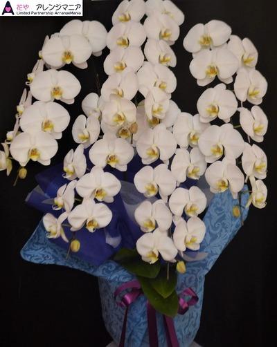 胡蝶蘭・沖縄で開店祝いの花屋