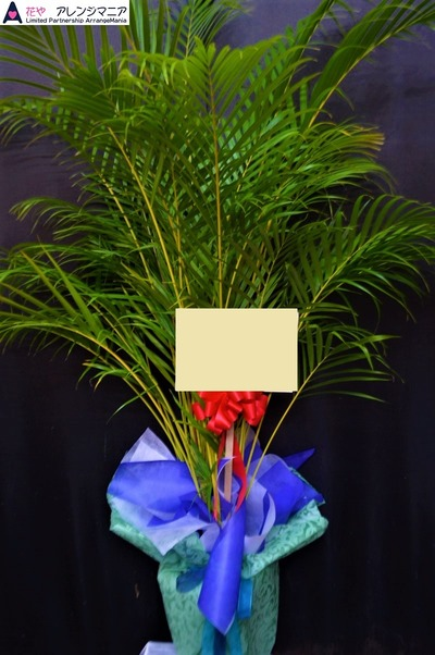 開店祝い・沖縄の花屋