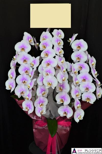 沖縄の胡蝶蘭