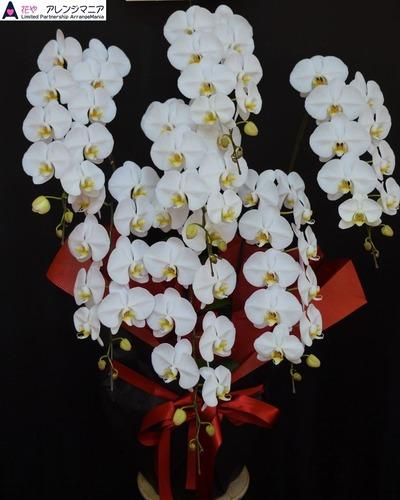 胡蝶蘭・沖縄の開店祝いのお花 (2)