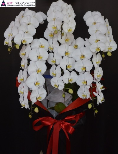 沖縄で開店祝いの胡蝶蘭