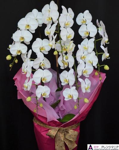 沖縄の開店祝いの胡蝶蘭
