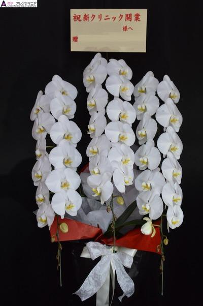 胡蝶蘭 開店祝いの沖縄の花屋