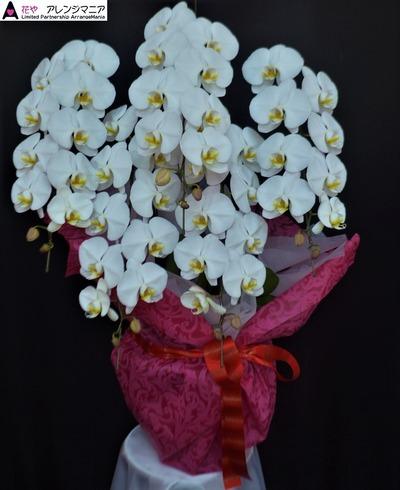 胡蝶蘭・沖縄の花屋さん開店祝い
