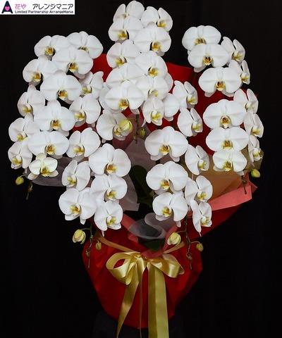 沖縄の胡蝶蘭‐開店祝い
