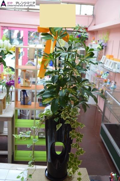 沖縄 花屋 開店祝いの観葉植物