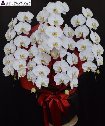 沖縄の花屋・開店祝いに胡蝶蘭