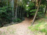朝のお散歩6
