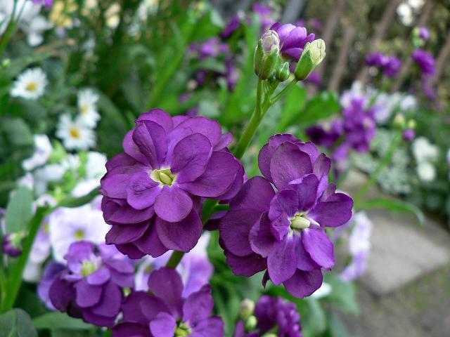 花の画像 p1_9