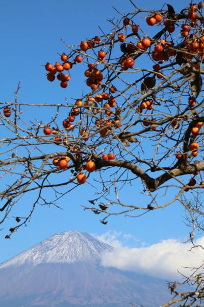 柿と富士山16