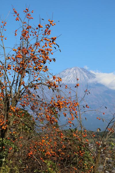 柿と富士山19