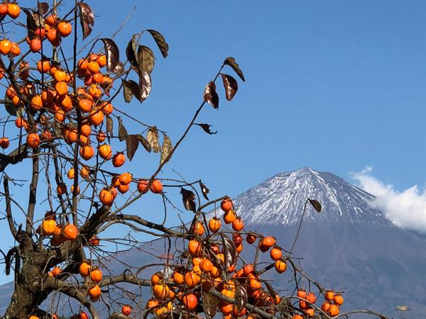 柿と富士山22