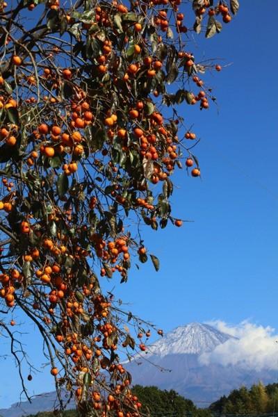 柿と富士山2