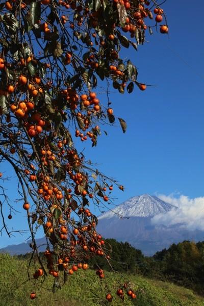 柿と富士山1