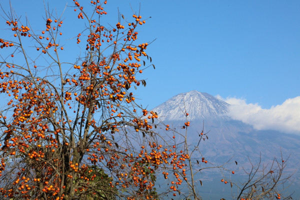 柿と富士山18
