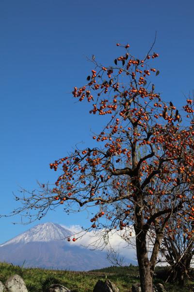 柿と富士山12