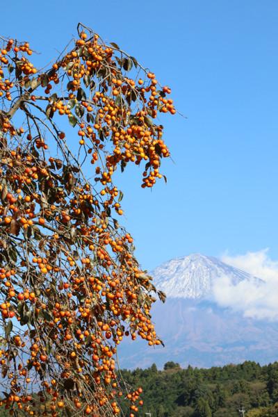 11/12 柿と富士山・2