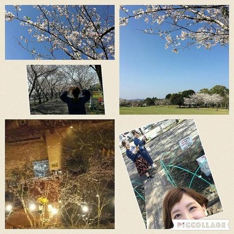 s-s-桜3
