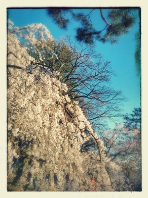 IMG_20150328_161057-EFFECTS