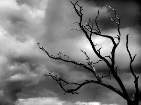 storm-tree_2357980