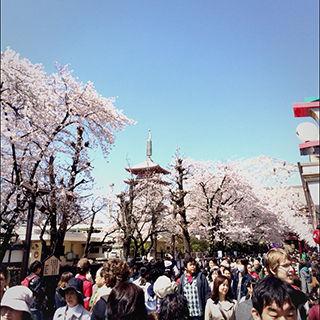 2015sakura_03
