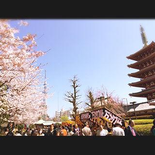 2015sakura_01