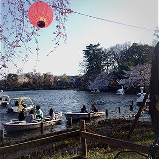 2015sakura_08