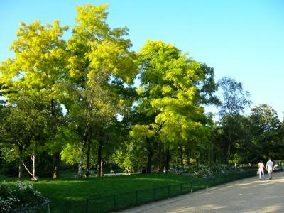 モンソー公園 緑