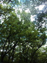 『第5回森の手づくり市』後記